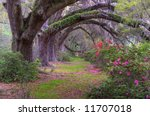 Spring Landscape Scene In Wood...
