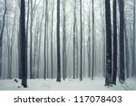 Winter Foggy Beech Forest Scene.