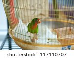 Beautiful Colorful Parrot In...