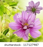 Exotic Flowers.flora Card