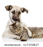 the dog embraces a cat. isolated on white background - stock photo