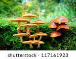 Mushrooms In Sunny Autumn Forest