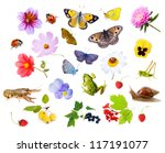 Collage Of Flowers  Insects An...