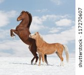 Two nice horses in the winter - stock photo