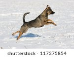 Nice happy dog running - stock photo
