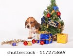 Beautiful puppy with Christmas decorations on white background - stock photo
