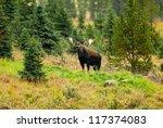 Small photo of Male Western moose portrait (Alces alces andersoni). Kananaskis, Alberta, Canada, North America