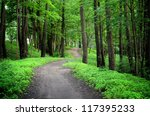 Dark Forest And A Road
