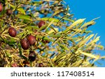 Olive branch with green leaves and olives on a background of blue sky - a symbol of Greece - stock photo
