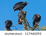 Vultures On The Lookout