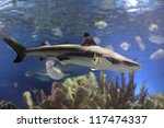 swimming shark underwater - stock photo
