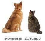 Cat and dog looking up. Add your text above. - stock photo