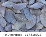 Frosty Leaves Background. Macr...