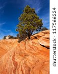 Pine Tree On Red Rocks In Utahs Zion National Park - stock photo