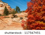 Red Maple Autumn Colors In Utahs Zion National Park - stock photo