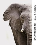 elephant close up isolated on... | Shutterstock . vector #117672007