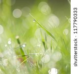 Fresh spring grass with water drops - stock photo
