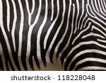 Close-up of stripes on zebra fur - stock photo