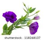 Purple Eustoma Flowers Isolate...