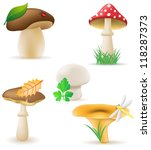 set icons mushrooms vector... | Shutterstock .eps vector #118287373