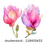 Beautiful Magnolia Flowers ...