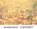 vintage color of grass | Shutterstock . vector #118420837
