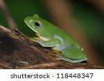 treefrog | Shutterstock . vector #118448347