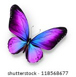 Stock photo violet blue butterfly isolated on white 118568677