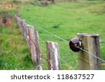 electric fence on farm | Shutterstock . vector #118637527