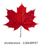Autumn Maple Leaf Isolated On...