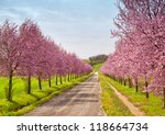 A road coasted by peach trees full of pink flowers - stock photo