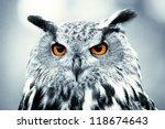 piercing owl eyes | Shutterstock . vector #118674643