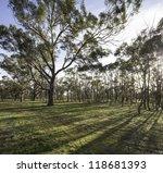 Australian Bush   Trees