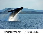 humpback whale breaching ... | Shutterstock . vector #118803433
