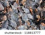 Dew On The Oak Leaves On Autumn