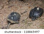 black terratin   Shutterstock . vector #118865497