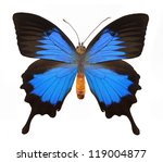 Blue Butterfly With Clipping...