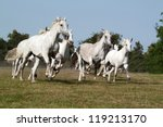 Herd horses running on meadow - stock photo