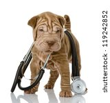shrpei puppy dog with a stethoscope on his neck. isolated on white background - stock photo