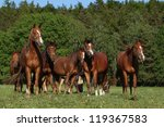 Herd of horses in the pasture - stock photo