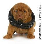 Puppy Growth   Dogue De...