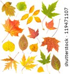 Autumn Leaves Collection...