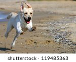 Stock photo yellow labradors running to the sea in summer 119485363