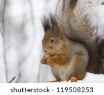Squirrel With A Hazelnut