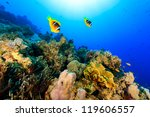 Two Clownfish Swiming Over A...