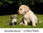 Stock photo cat and dog 119617003