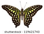 Butterfly Species Graphium...