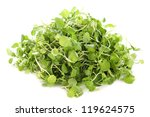 Watercress, Nasturtium officinale, in front of white background - stock photo
