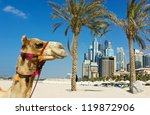 Camel at the urban building background of Dubai. UAE - stock photo