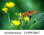 Monarch Butterfly On The Yello...